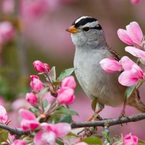 primavera-meteorologica
