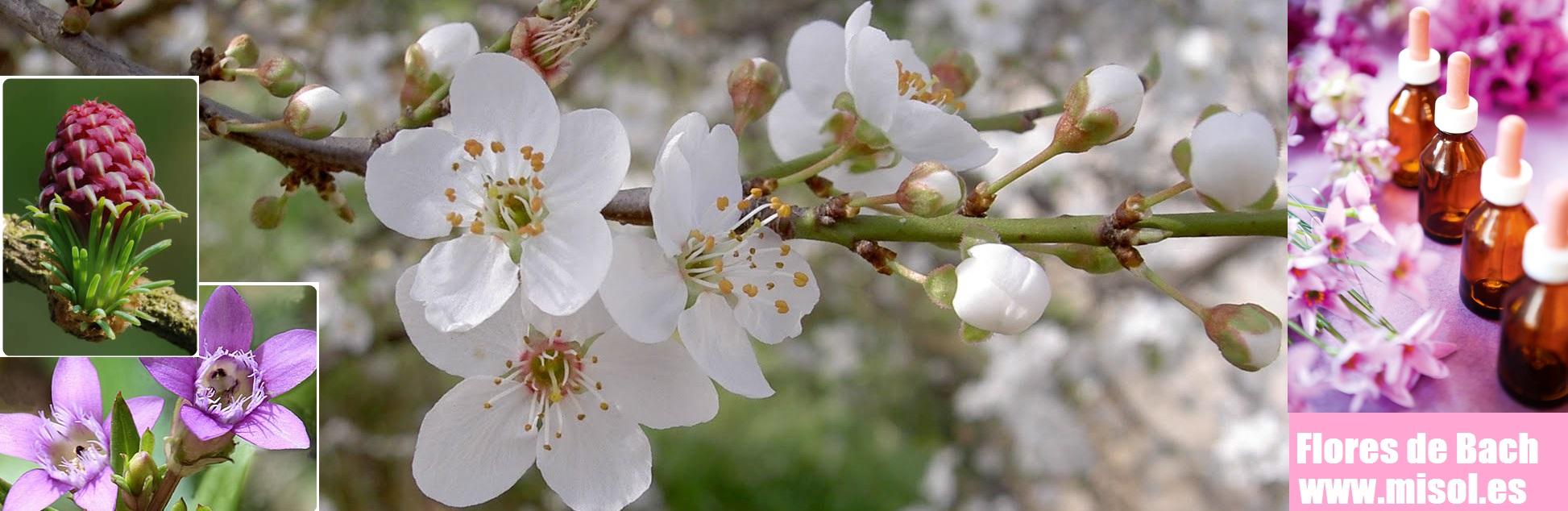 Flores de Bach MiSol